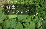 鎌倉ノスタルジー