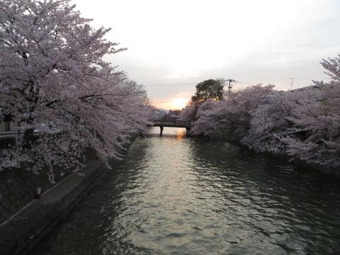 京都の桜 2014 ~ 逢魔が時、岡崎疎水周辺を歩く