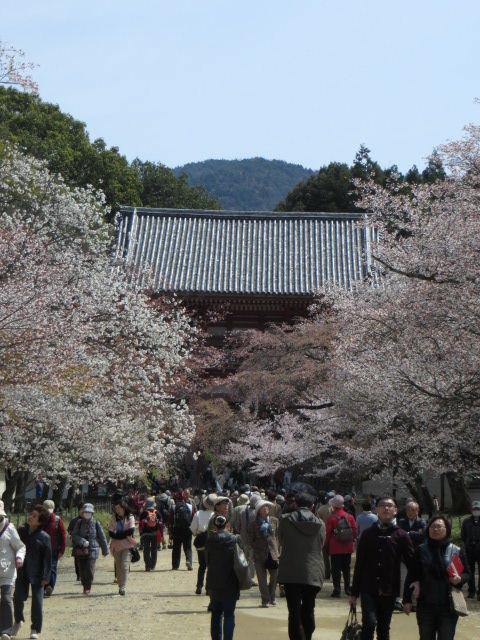 京都の桜 2014 ~伏見区「醍醐寺」その② ~下醍醐「大伝法院」