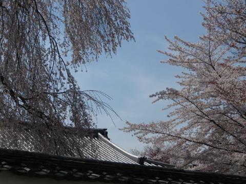京都の桜 2014 ~伏見区「醍醐寺」その① 総門~桃山時代の華やかさ「三法院」