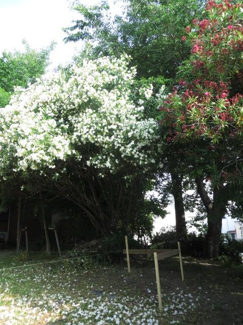 愛知県名古屋市/熱田神宮の西側~史跡散策路「「白鳥断夫山コース」 後編