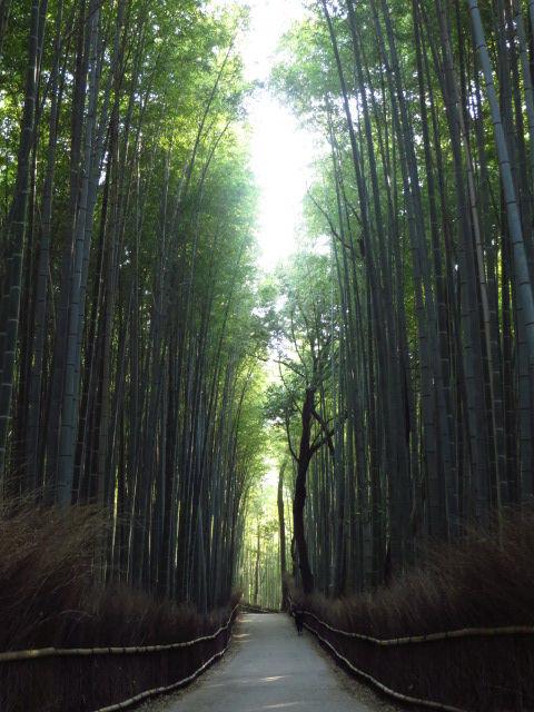 4月の京都 2014 嵐山を歩く その①~桂川西側、櫟谷宗像神社から桂川沿いを遡る
