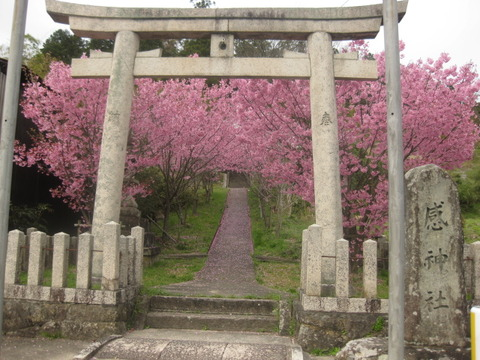 桜の聖地 武田尾散策 番外編その②~桃色の桜の園・三田市山田 『感神社』