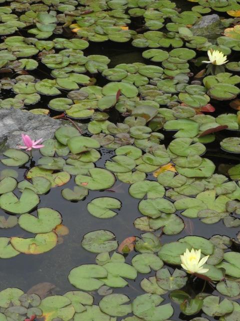 愛知県名古屋市/築山を御嶽山に、流れる川を木曽川に、そして伊勢湾へ~池泉回遊式の日本庭園「白鳥庭園」