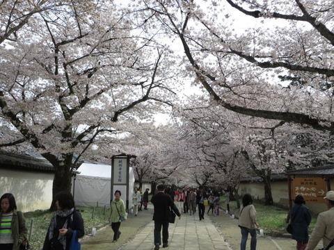 京都の桜 2014 ~伏見区「醍醐寺」その④~必見の桜たち「醍醐寺霊宝館」周辺