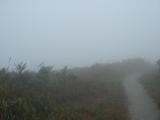 霧に巻かれた道