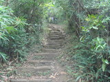 茂みの中の石段