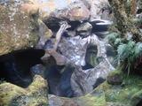 周辺の奇石