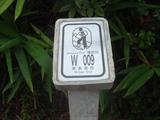 ウィルソントレイル