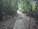 薄暗い平坦な山道