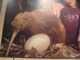 キーウィ&卵