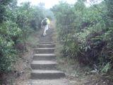渣甸山への急坂