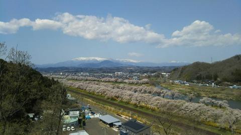 miyagi-hitome-sakura