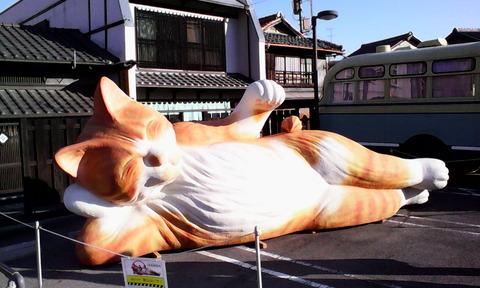 IMG_seto_cat_nehan