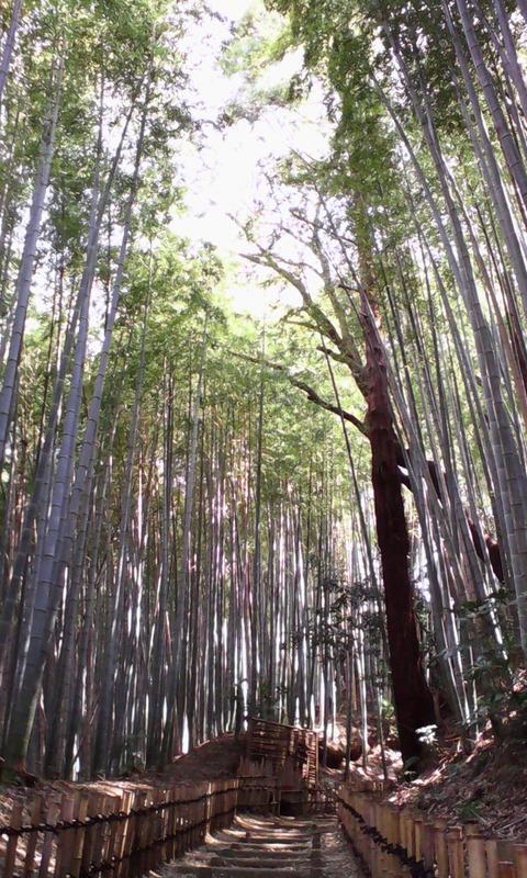 chiba_sakura_road