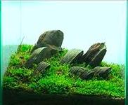 30センチキューブ水槽を徹底比較!ADA・コトブキ工芸・GEX・ニッソー・テトラ