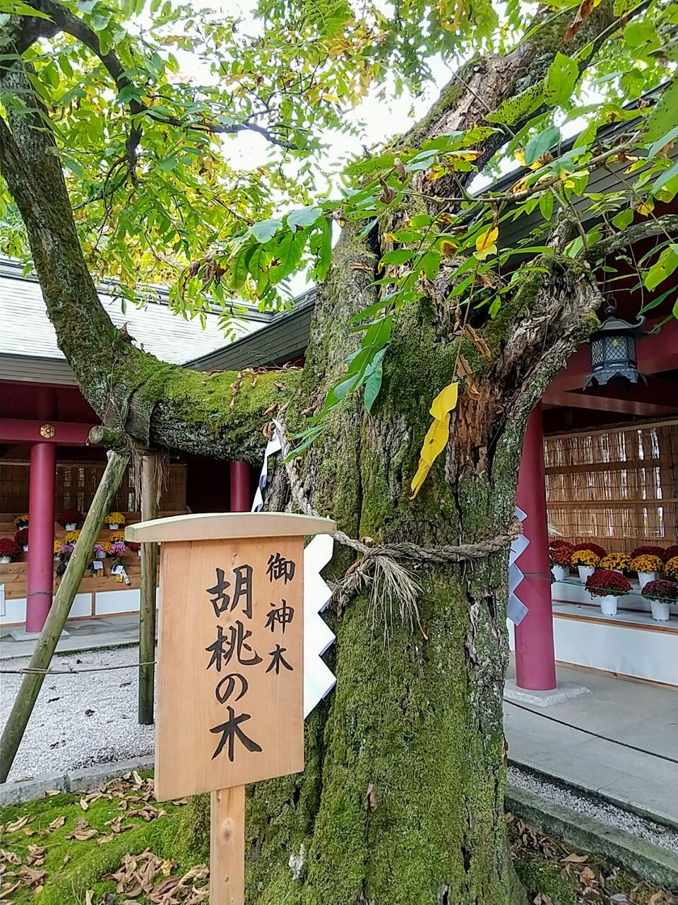 笠間市 : ビリーのダンディ☆倶楽部