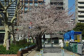 お花見04-2012