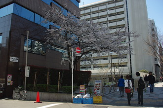お花見08-2012