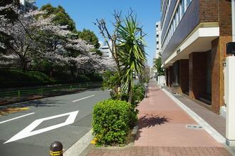 お花見06-2012