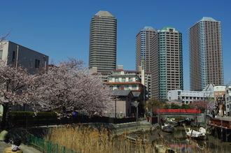 お花見02-2012