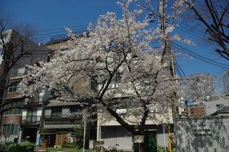お花見03-2012