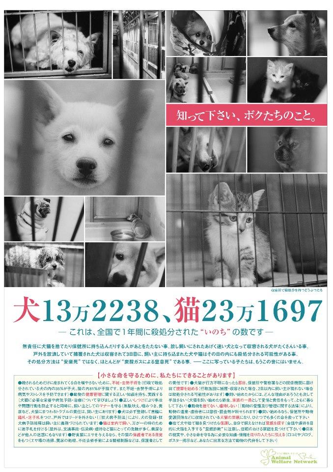 ペット殺処分問題への提案 - toyo.ac.jp