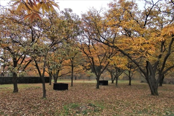 R-PB286313栗林