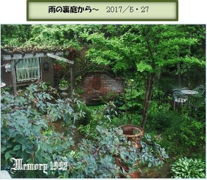 から~雨の裏庭