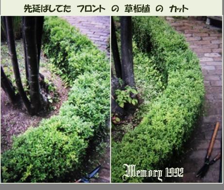 先延ばしの草柘植カット