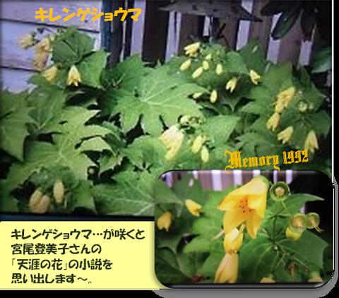 キレンゲショウマ・宮尾登美子天涯の花