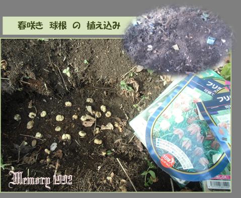 植え込み春咲き球根