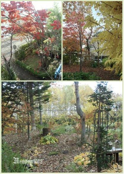 紅葉今日の庭から