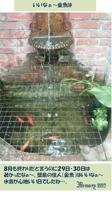 )壁泉の住人(金魚
