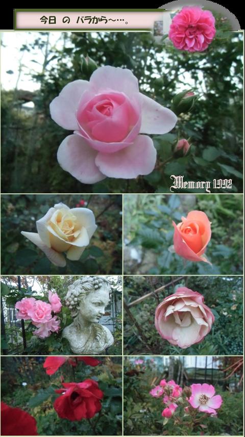 2今日のバラから~…