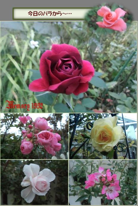 今日のバラから~