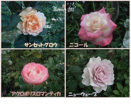 4種類の薔薇