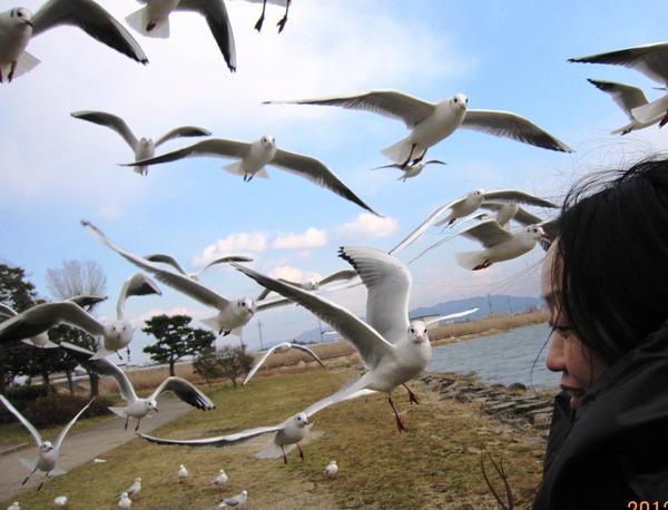 琵琶湖 017-1