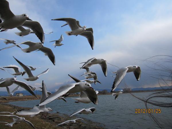 琵琶湖 009