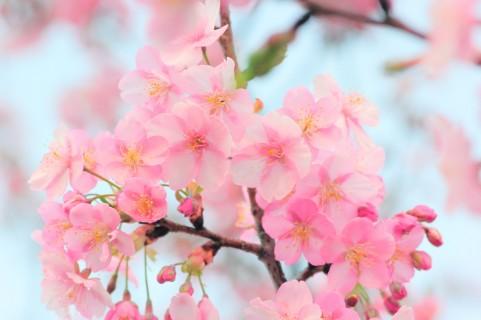 【顔文字】春(52個) - かわいい・シンプル