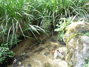 676 水と草