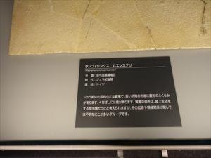 DSC05108_R