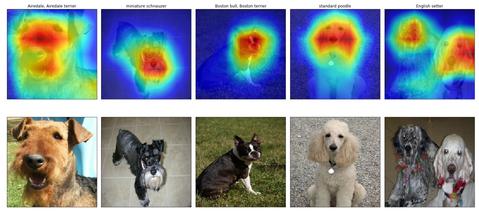 dog_localization