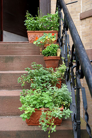 階段に置いた鉢植えハーブ