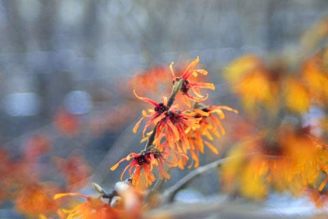 セントラルパークの木の花