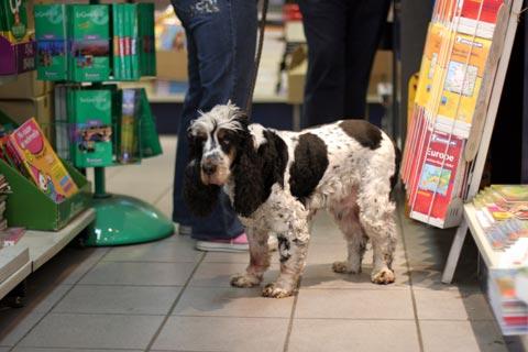 パリの本屋の犬