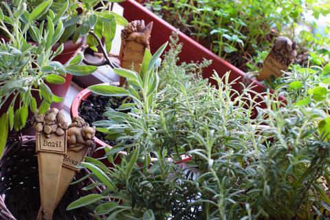 窓際ガーデンをおしゃれにする計画第1弾