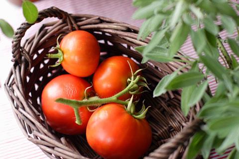 バスケットいっぱいの窓ぎわガーデントマト