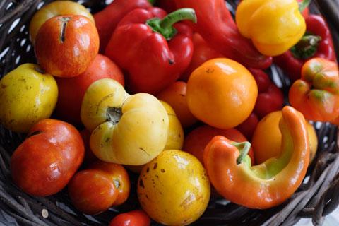 バスケットいっぱいのトマトとパプリカ