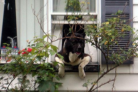 窓が好きな犬ちゃん